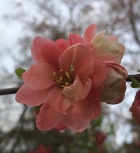 Fleur1-SolveigWerner