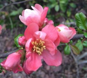 Fleur2-SolveigWerner