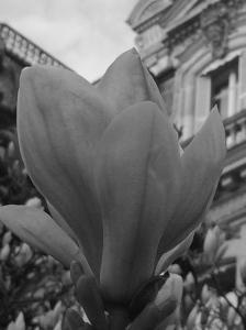 Fleur3-SolveigWerner