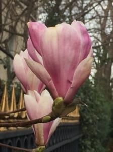 Fleur4-SolveigWerner