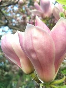 Flower2SolveigWerner