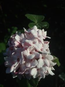Flower-SolveigWerner